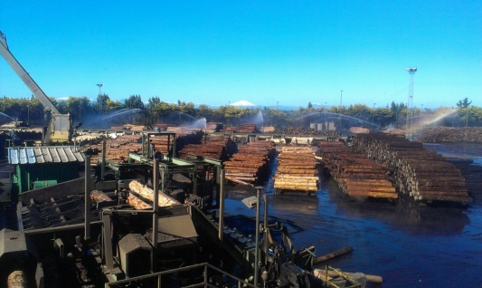 Log yard at the sawmill in Mulchen, CMPC, Chile.